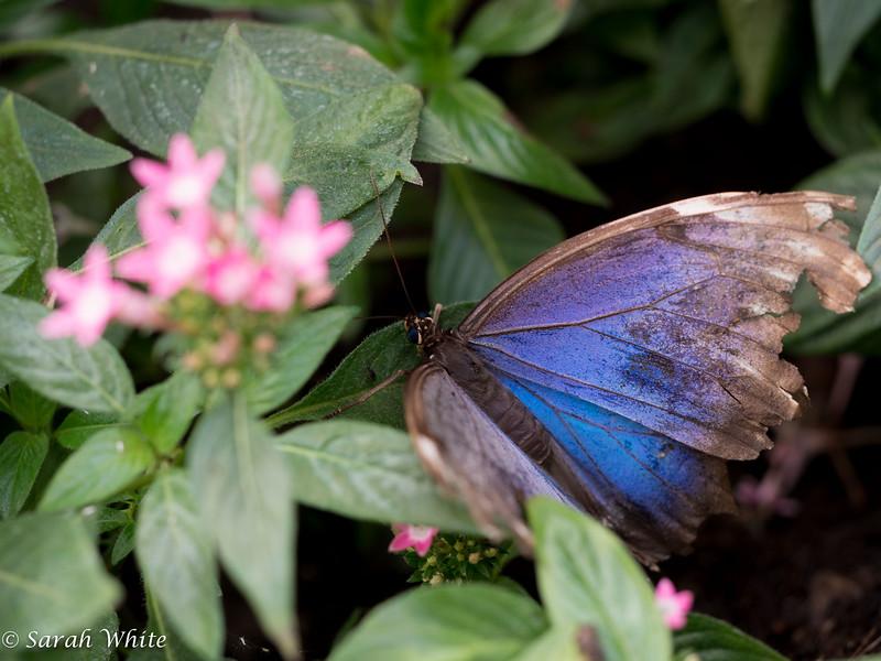 140503_ButterflyHouse_458.jpg