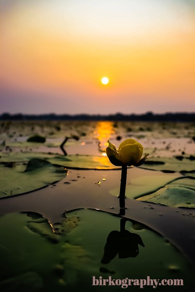 Lily pads and a smoky sunrise.  Taken from my kayak in Grays Bay on Lake Minnetonka, MN