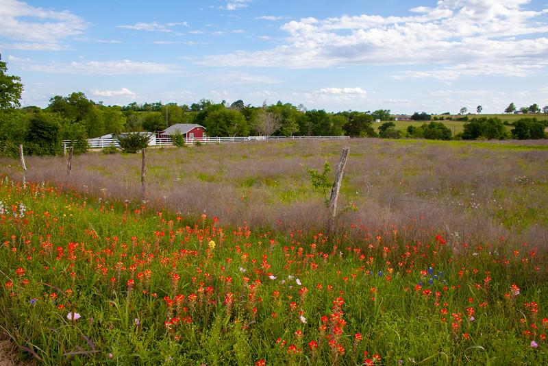 2016_4_9 Texas Wildflower Shoot-8776.jpg