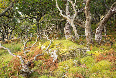 The Isle of Mull - autumn 2014