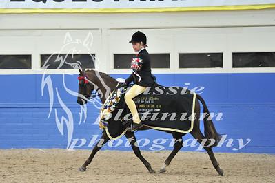 Class 18 Med Show Pony