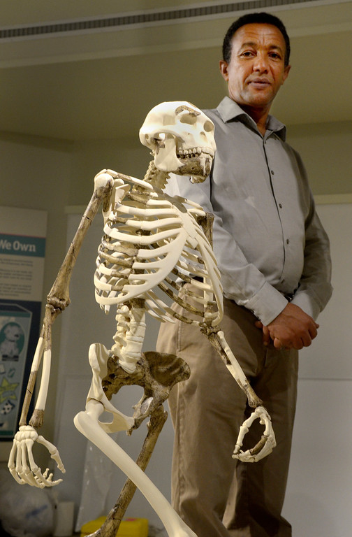 """. Jeff Forman/JForman@News-Herald.com Yohannes Haile-Selassie stands next to the newly sculpted skeletal reconstruction of \""""Lucy,\"""" a 3.2 million-year-old human ancestor. Haile-Selassie is the currator of physical anthropology at the Cleveland Museum of Natural History. The reconstruction was cast by museum artisans Carl Jara and Nicole Dobrinic."""