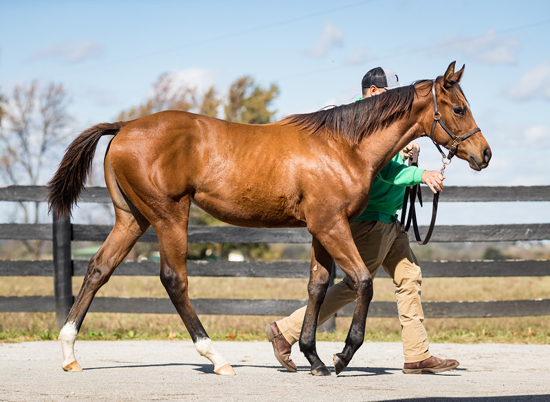 Mastery - Helensvale at Runnymeade 10.22.19