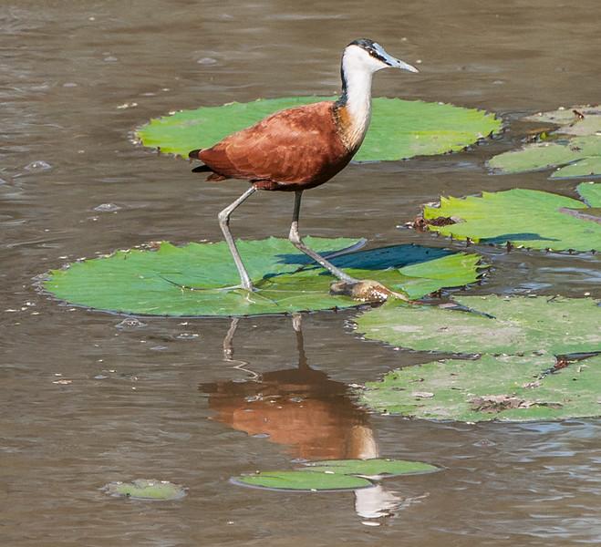 Birds_JesusBird-1.jpg