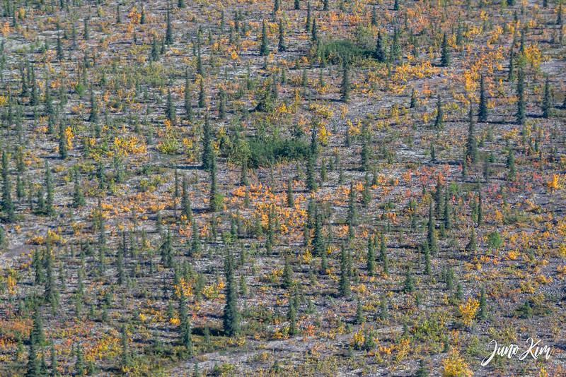 Rust's_Beluga Lake__6100853-2-Juno Kim.jpg