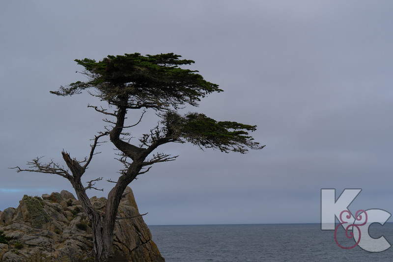 The Lone Cypress Tree - Known as Pebble Beach Logo