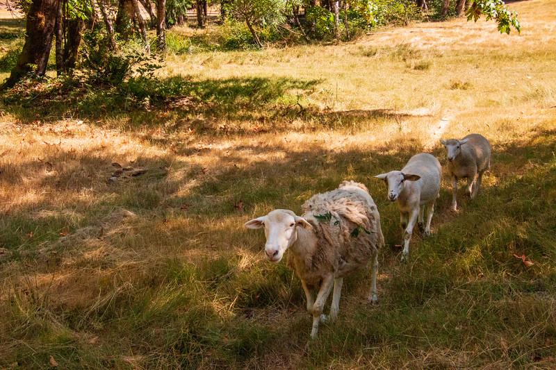 Leaping Lamb Farm-8279.jpg