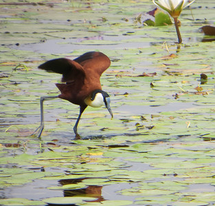 Botswana 2013 - Okavango river safari