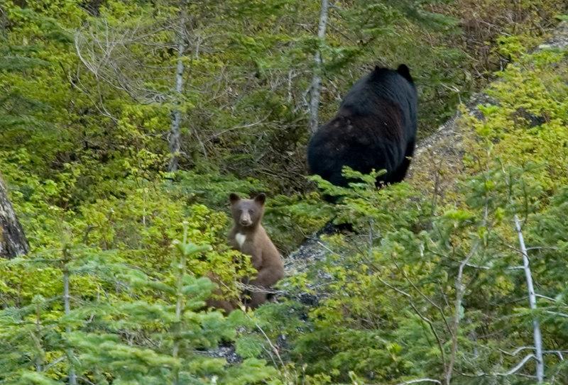 Bears_4.jpg