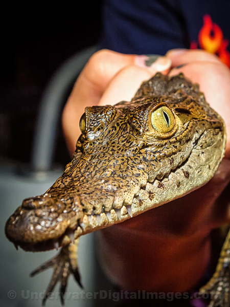American Crocodile Education Sanctuary--19-2.jpg