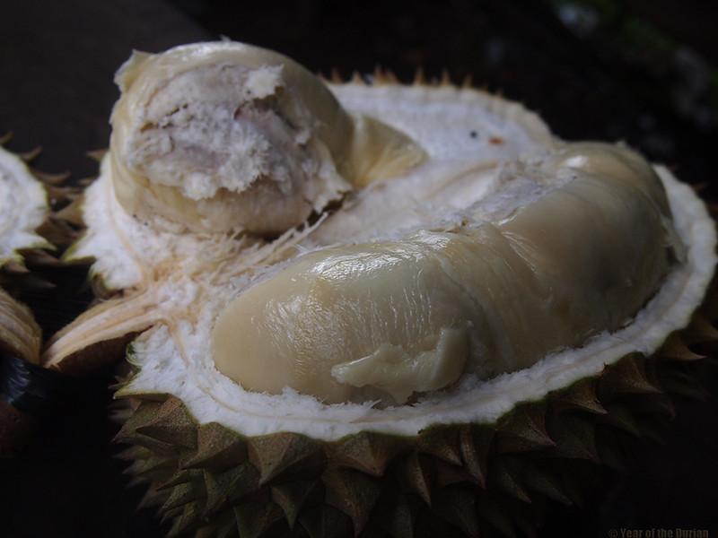 Durian-Bestala.jpg