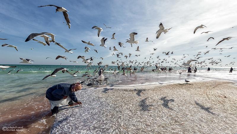 Sardine Season (52)- Dhofar.jpg