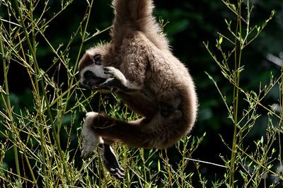 Ouwehands Zoo Rhenen