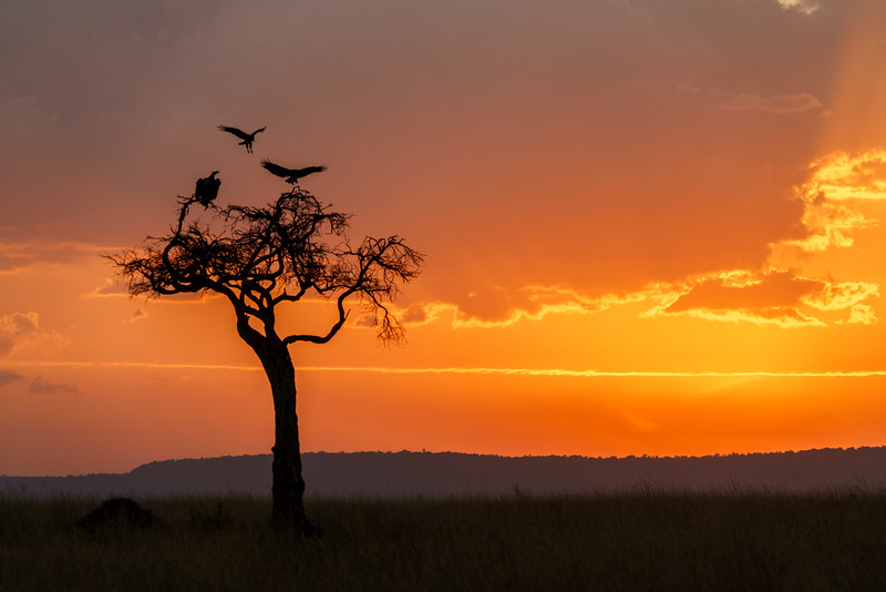Kenya 2015-03022-2.jpg