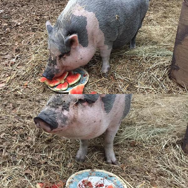 Ivy_loves_her_watermelon___rowdygirlsanctuary_by_fyref0x.jpg