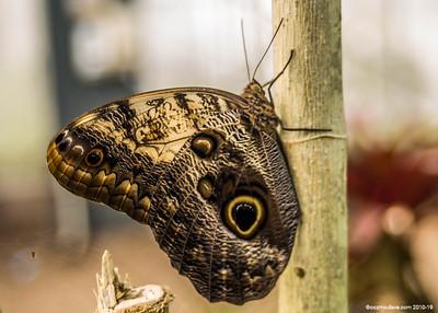Butterflies & Moths 2018 - Set 3