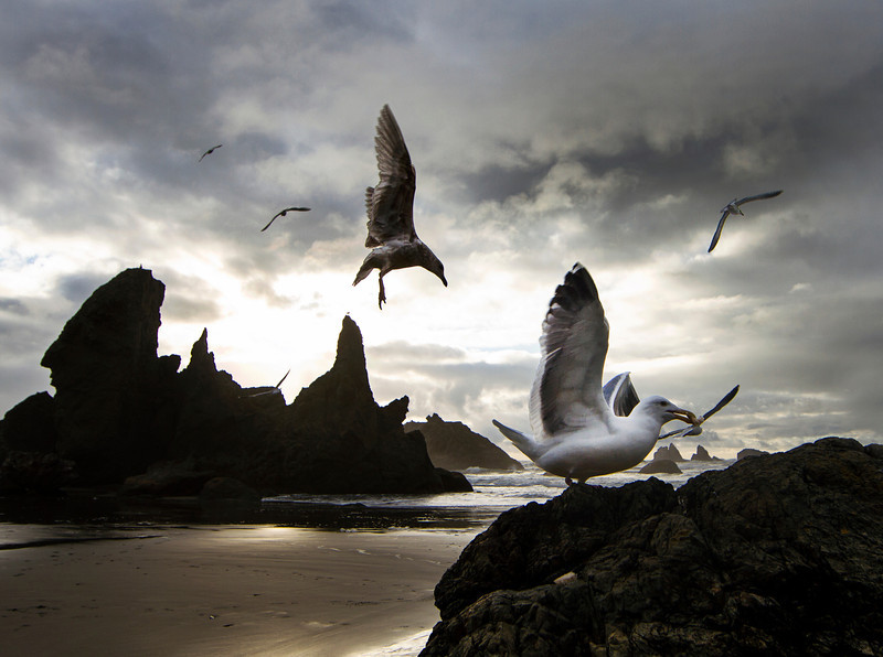 gulls at beach bandon.jpg