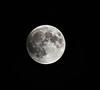 moon full from my backyard