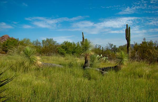 Desert Botanical Gardens: Pheonix AZ