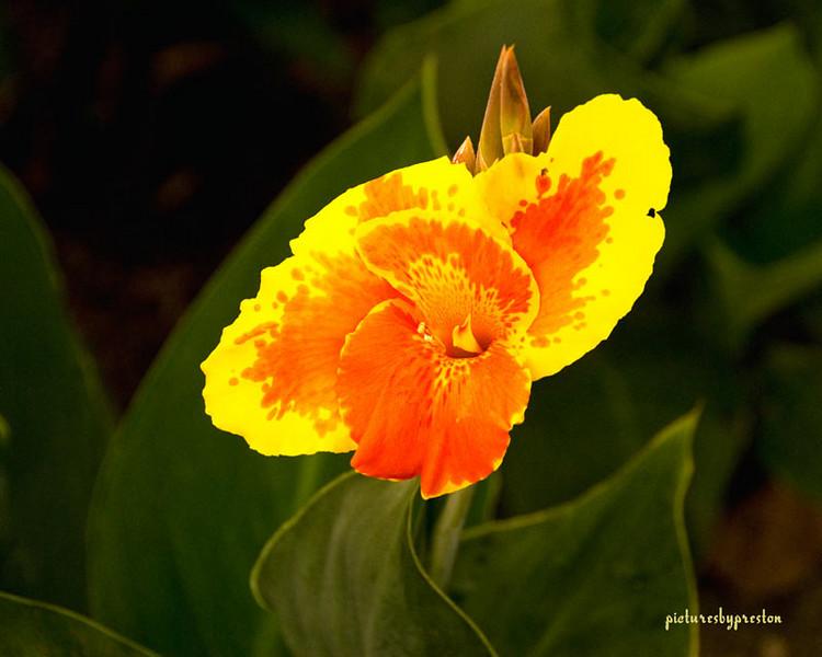 yrflower.jpg