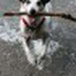 farley pups 077-2.jpg