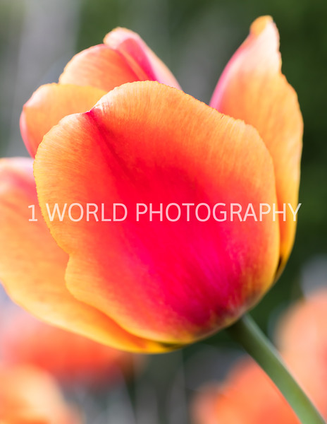 Cantigny Spring '17-407-41.jpg