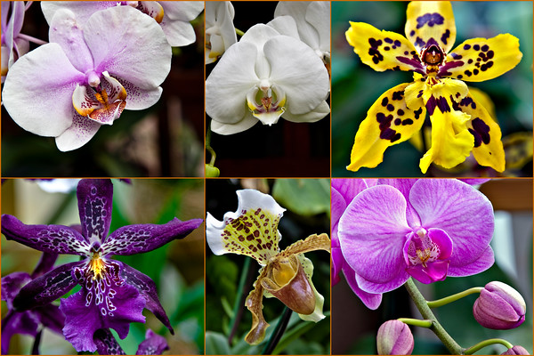 National Parks and Flowers