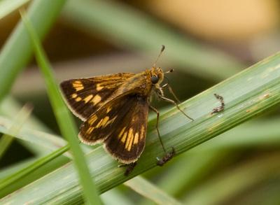 butterflies_13sept09QBG006.jpg