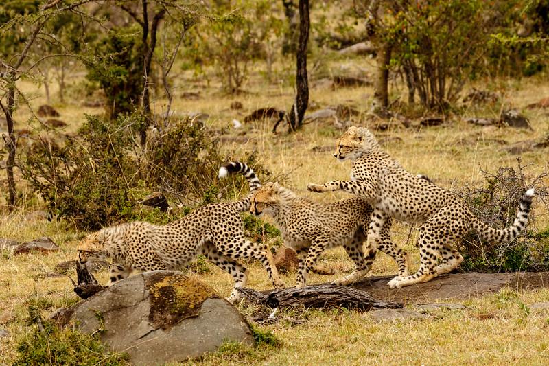 Kenya 2015-09024.jpg