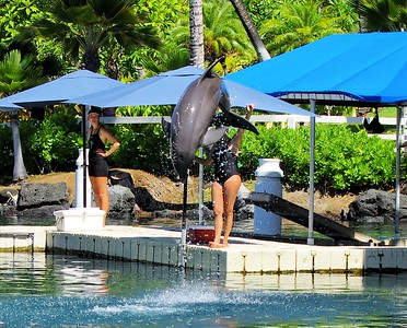 Dolphin Quest Waikoloa