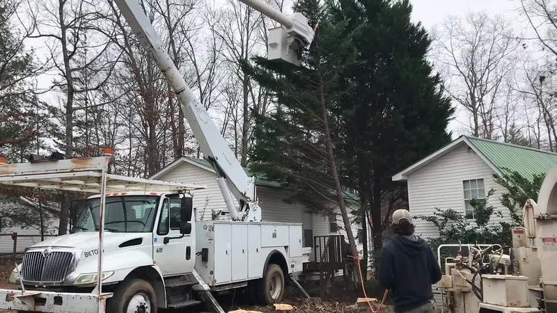 TREE to the CHIPPER