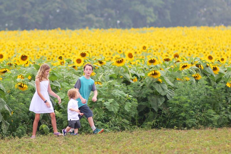 FamilySunflowers_ 98.jpg