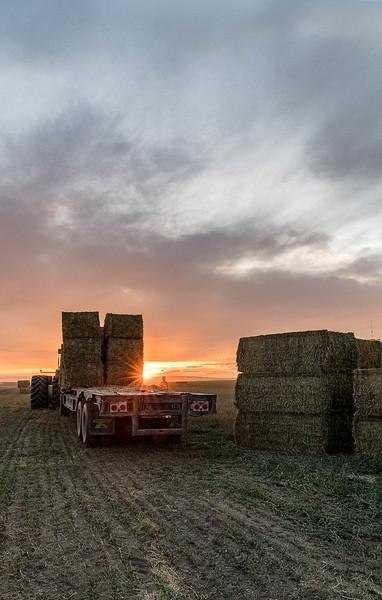 barley 28.jpg