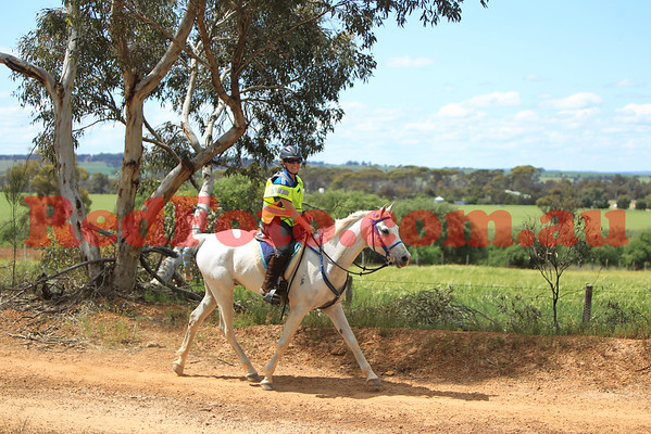 2014 10 04 Tom Quilty Gold Cup Endurance Badgarning Road