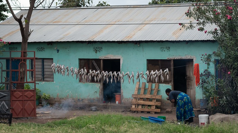 Drying fish (to be smoked)
