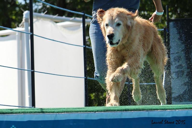 2015.8.5 Winnebago County Fair Dock Dogs (47).JPG