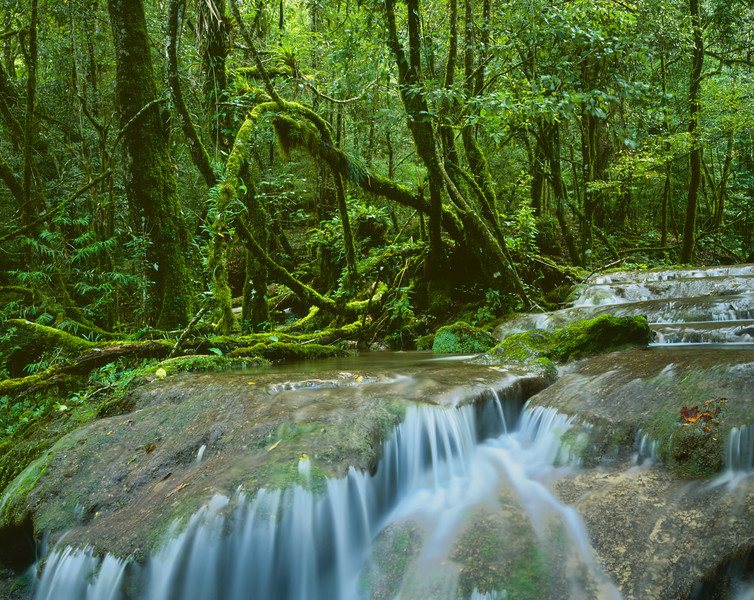 Tamaulipas, Mexico / El Cielo Biosphere Reserve cloud forest with Bromeliads growing in vine and moss covered forest lining stream's series of waterfalls. 1003H4