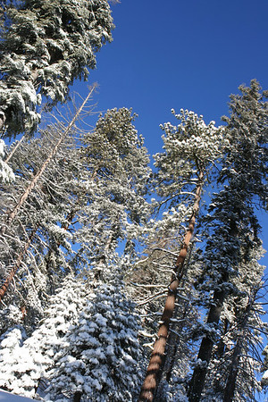 Sequoia Winter Wonderland