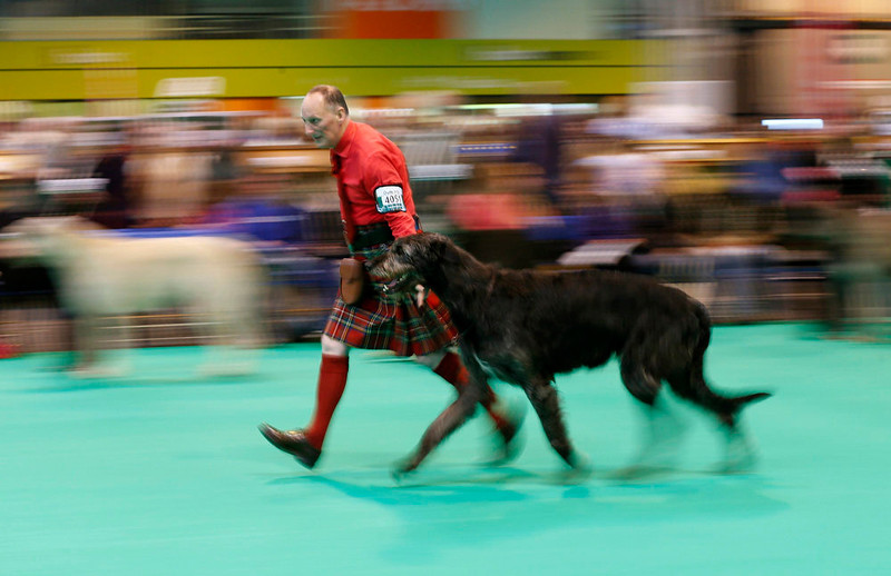 . A man wearing a kilt shows an Irish Wolfhound during the first day of the Crufts Dog Show in Birmingham, central England March 7, 2013. REUTERS/Darren Staples   (BRITAIN - Tags: ANIMALS SOCIETY)