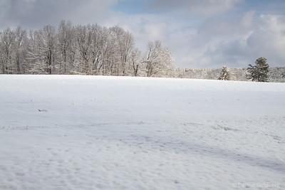 Maudslay State Park - 2014