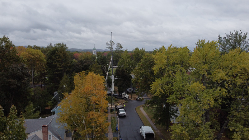 Tree Removal on Hilltop
