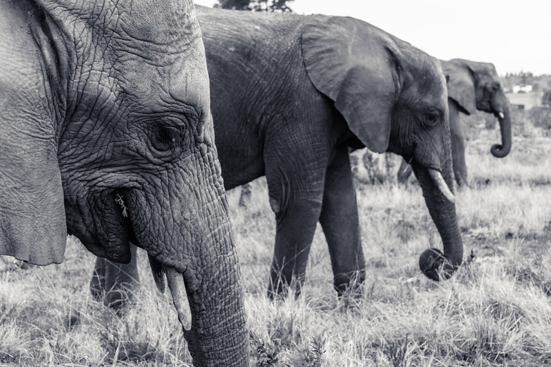 SouthAfrica-20150829-0065.jpg