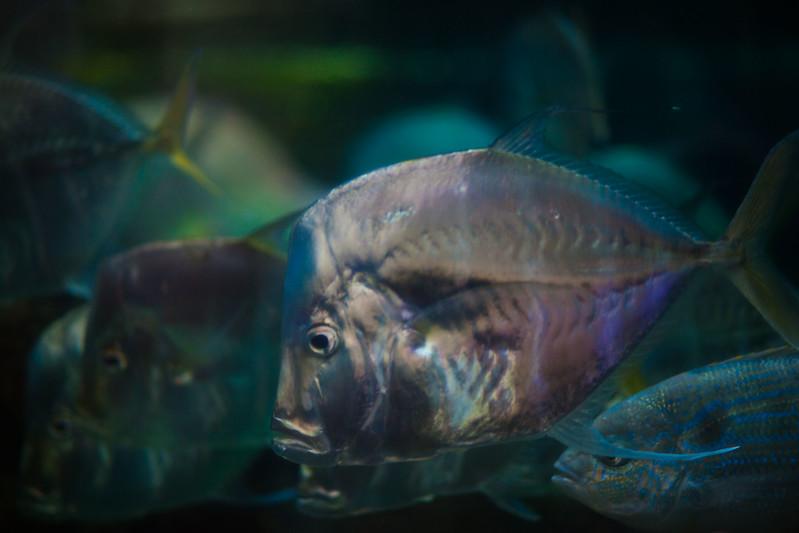 2014 10 25 Dallas World Aquarium-56.jpg