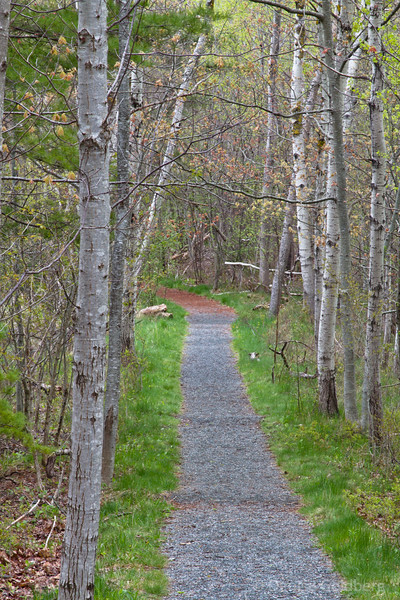 trees line the Jessup Path