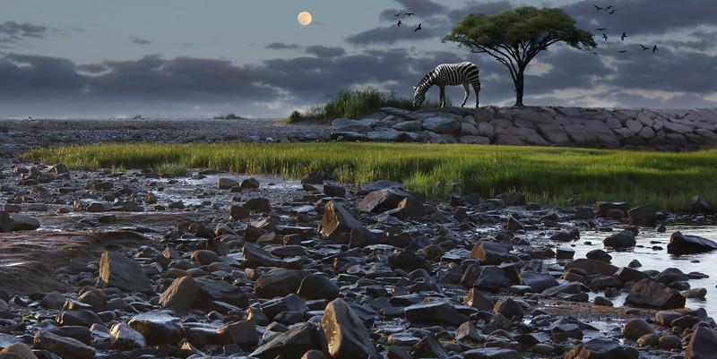 zebra-field.jpg