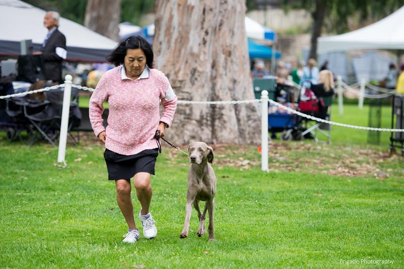 2019 Pasadena Kennel Club-8151.jpg
