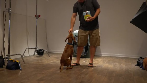 Archie Training Video