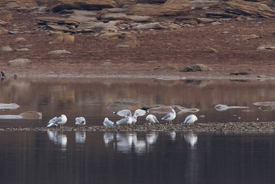 2019-12 Birding at Long Hunter