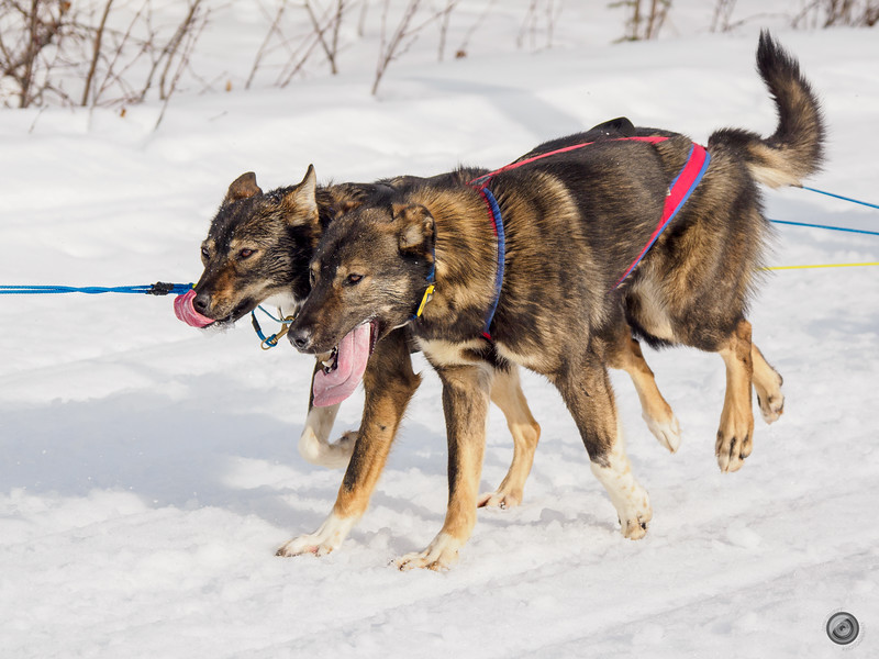 20190325_Blaire_and_Liz_Mushing_42.jpg
