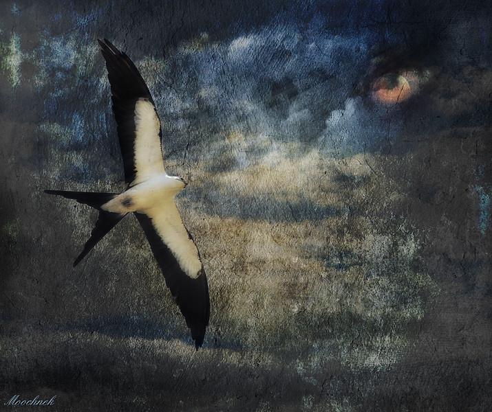 Flight to Oblivion